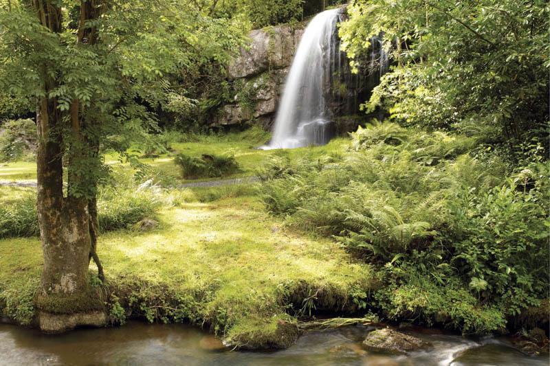 Irish gardens formal planting or nature s design lorum for Celtic garden designs